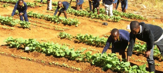 The Maliba Agric Project 2014
